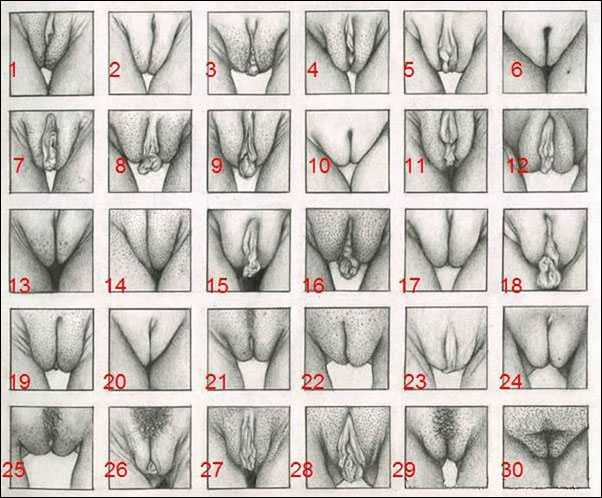 Shapes and sizes of various pussy photos porn