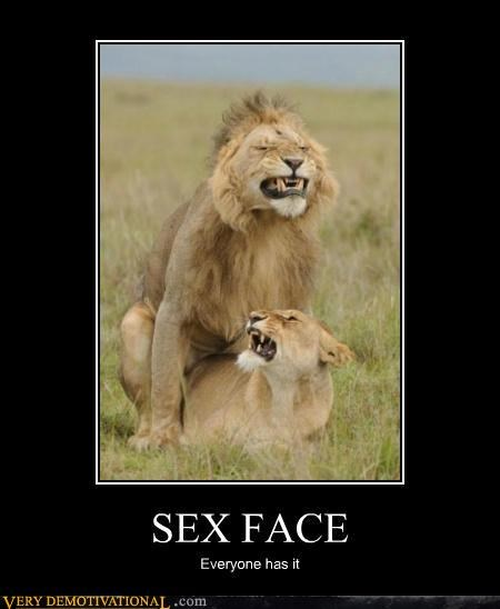 Funny picture sex