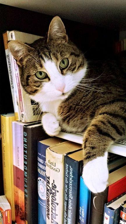 Aisselles chatte poilue et