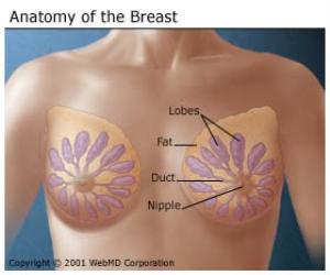 Man breast lump