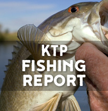 Striped bass report for n h